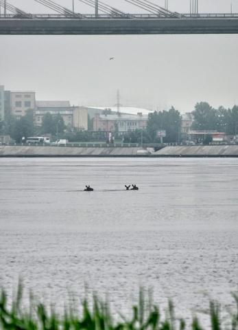 В Петербурге лоси открыли купальный сезон : Фото