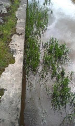 В реке Волковка зафиксировано загрязнение нефтепродуктами: Фото