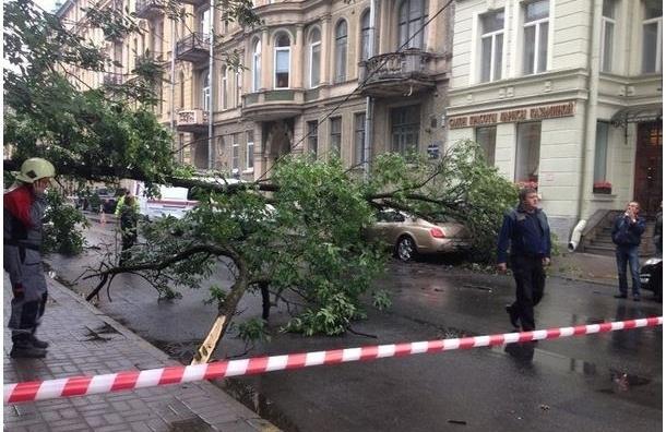 В Петербурге дерево раздавило Bentley