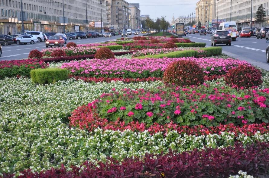 Цветники на Московском пр. (3)