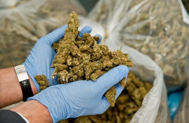 В Петербурге в одной из квартир полиция обнаружила плантацию марихуаны