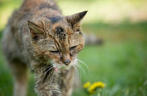Самая старая кошка в мире умерла в Британии в 24 года
