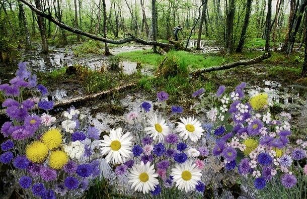 Болота могут спасти экологию Петербурга