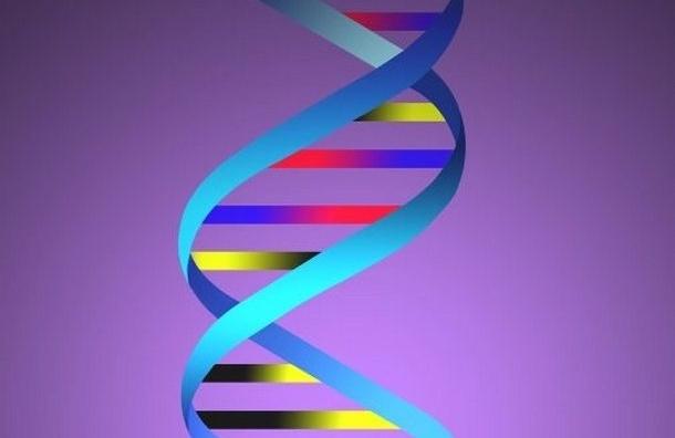 Нетрадиционная ориентация связана с активностью определенных генов