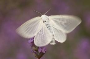 Москву заполонили умирающие белые бабочки