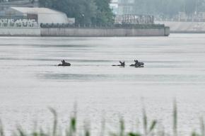 В Петербурге лоси открыли купальный сезон