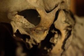 В Красносельском районе нашли мумию мужчины