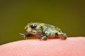 В «Пулково» у туриста нашли 180 живых рептилий и лягушек