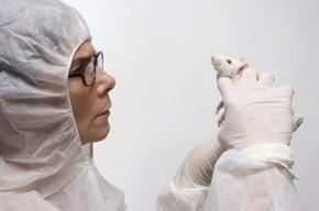 Ученые из США научились удалять и восстанавливать память