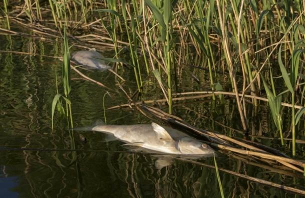 В Ленобласти река Войтоловка превратилась в поток навоза