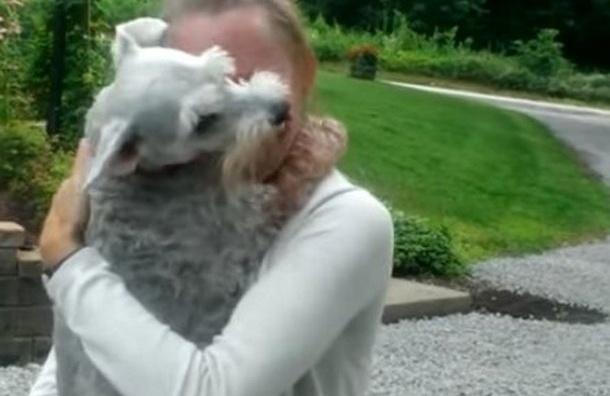 Собака едва не упала в обморок, встретив хозяйку через два года