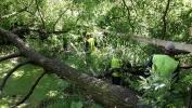 Фоторепортаж: «Застройщик уничтожает пруд в парке Александрино вопреки решению суда»