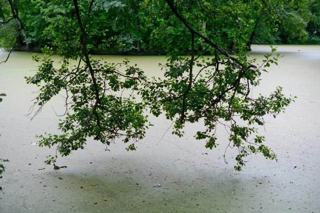Пруд на Крестовском: Фото