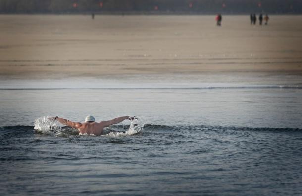 Пловцы-марафонцы переплывут Финский залив от Петербурга до Кронштадта