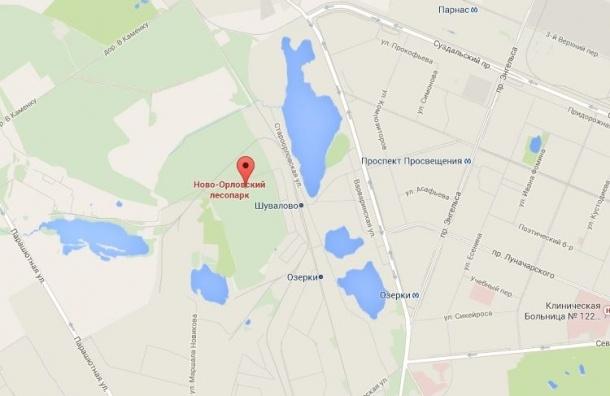 В Петербурге тела двух женщин с пленкой на голове найдены в лесопарке