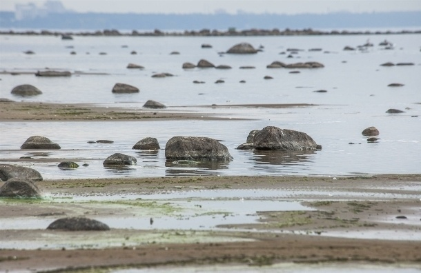 Финский залив губит гидротехника