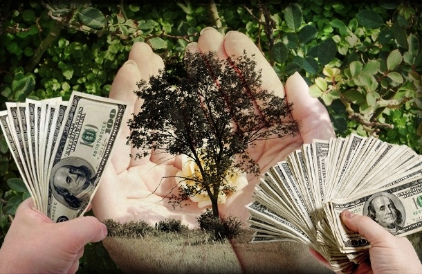 Петербуржцев научат любить природу за 13 миллионов рублей