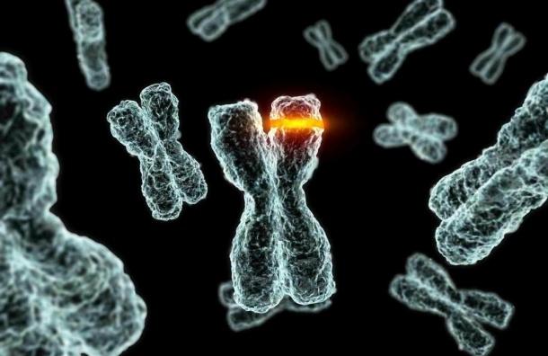 Ученые: Выбор друзей предопределен генетически