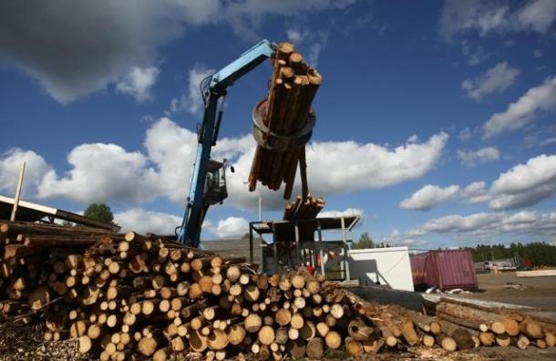 Петербургская биржа впервые запустила торговлю лесоматериалами