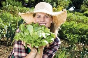Летние овощи: самые полезные и доступные
