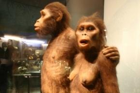 Ученые отодвинули эволюцию человека на миллион лет назад