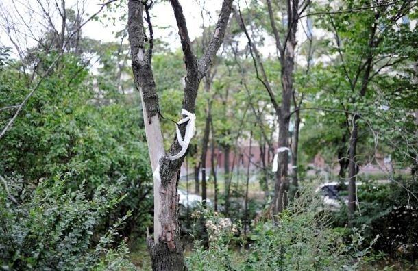 В Московском районе погибают деревья