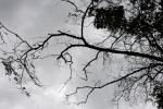 Фоторепортаж: «Сухие деревья»