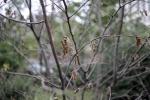 Сухие деревья: Фоторепортаж