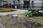 Фоторепортаж: «Вырубка на Васильевском острове»