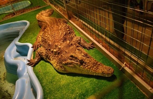 В Петербурге возбудили уголовное дело по факту демонстрации крокодилов
