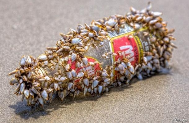 В Балтийском море нашли бутылку 200-летнего джина