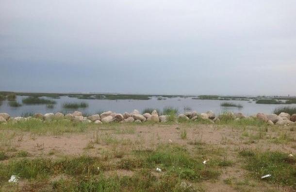 «МР» посетил неизвестный пляж Петербурга
