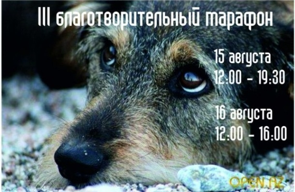 В Петербурге собирают помощь на приют для бездомных собак