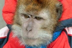 В центре Петербурга 11-летнюю девочку укусила обезьяна