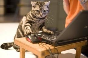 Кот-хакер взломал Wi-Fi сети