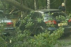 В Невском районе упавшее дерево раздавило две машины