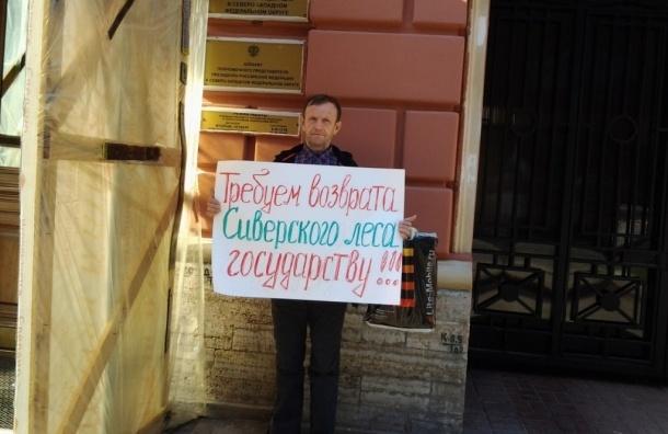 В Петербурге прошел пикет в защиту Сиверского леса