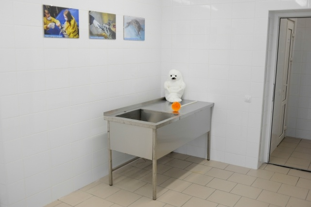 Центр для реабилитации тюленей: Фото