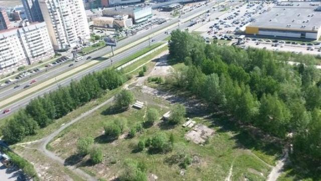 Жители улицы Савушкина пытаются защитить от вырубки безымянный сквер: Фото