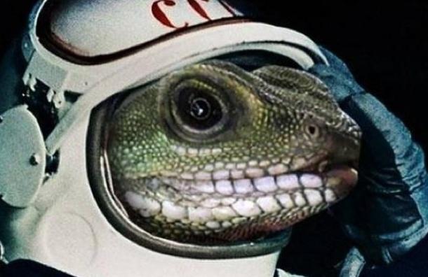 Гекконов-космонавтов убил неизвестный космический фактор
