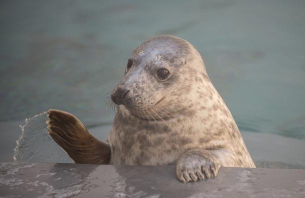 В Репино открылся детский сад для тюленей