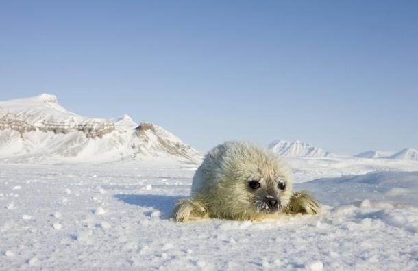 Льды Арктики могут полностью растаять к 2030 году
