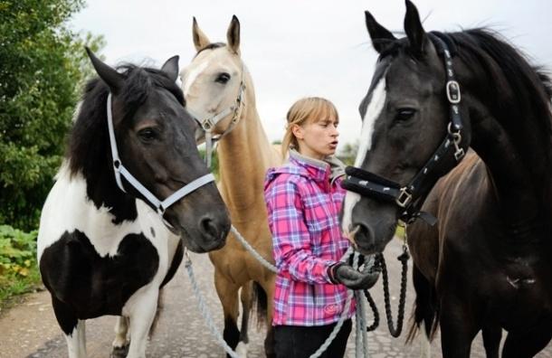 Загнанных лошадей спасают в Пушкине