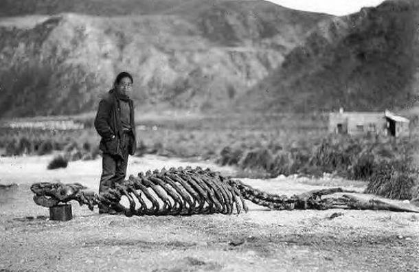 Археологи в пустыне Гоби нашли яйца и тушу  динозавра