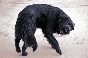 На Ямале второклассницу загрызли собаки на школьном дворе