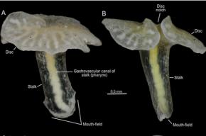 В глубинах Тихого океана ученые нашли новые формы жизни