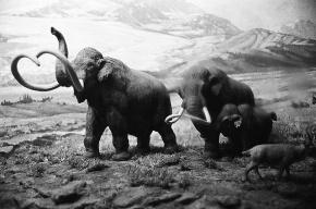 Путин обсудил с учеными клонирование мамонта