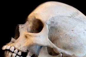 На Сестрорецких болотах собирательница клюквы нашла череп
