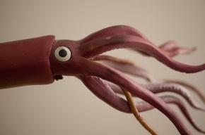 В Петербург приплыли подозрительные щупальца кальмаров