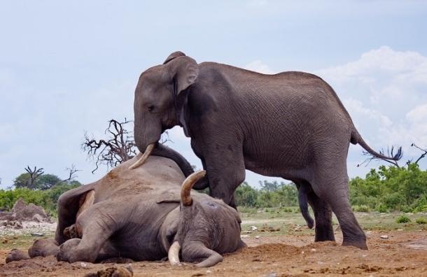 WWF: Диких животных стало в два раза меньше